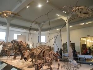 Fossil Halls